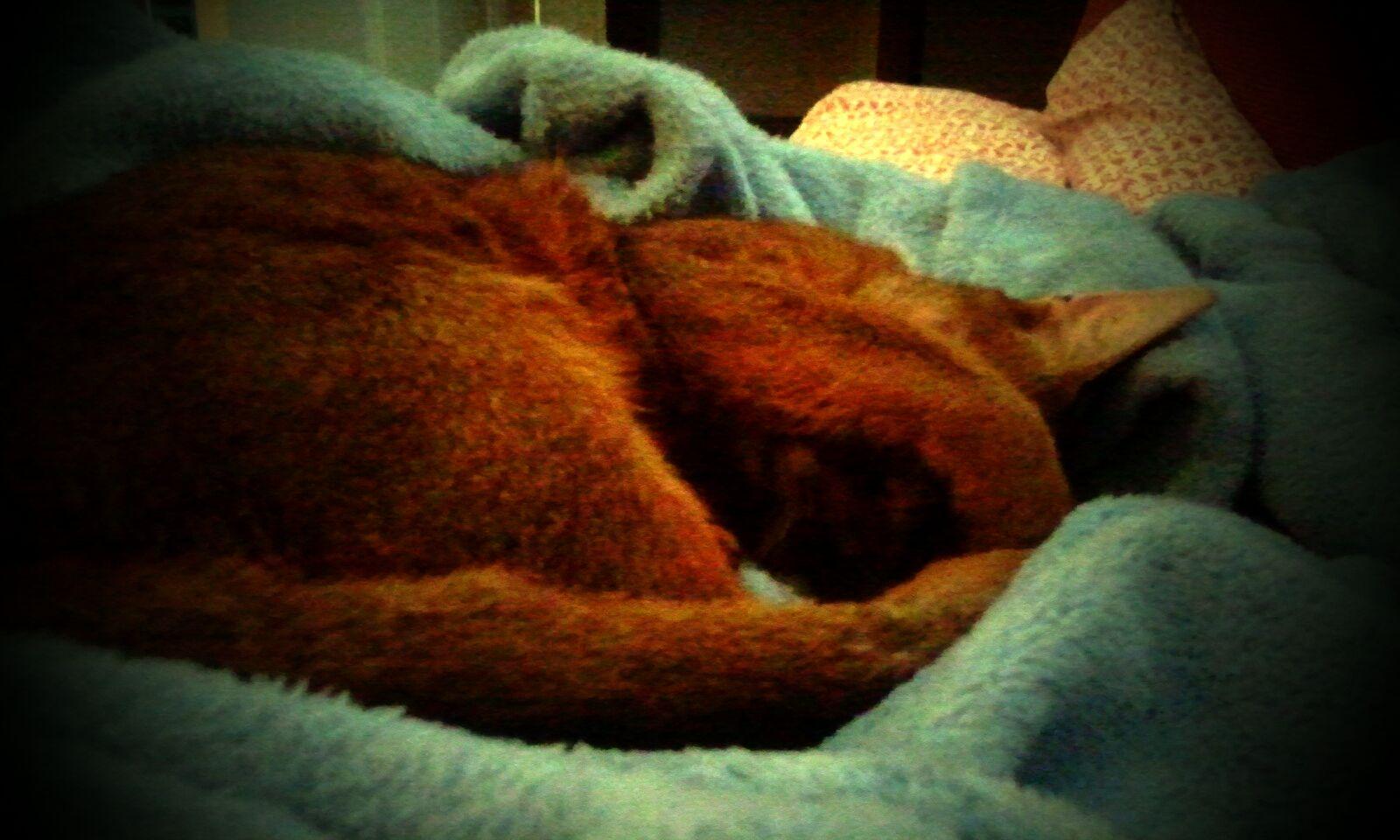 Macksie x (always sleeping)