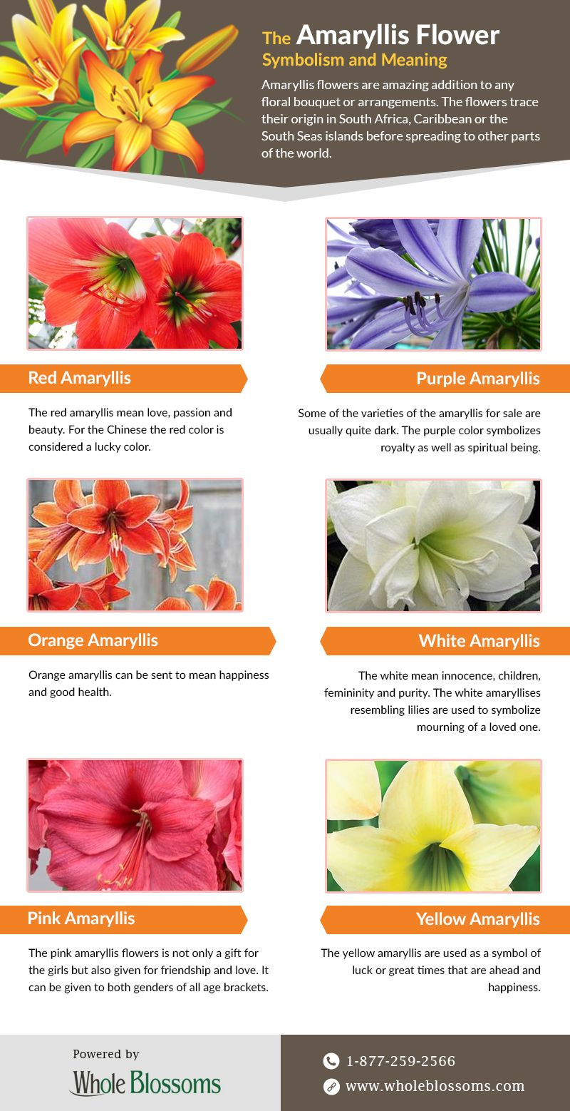 How To Find Amaryllis Flower Symbolism And Meaning In 2020 Amaryllis Flowers Amaryllis Wedding Flowers