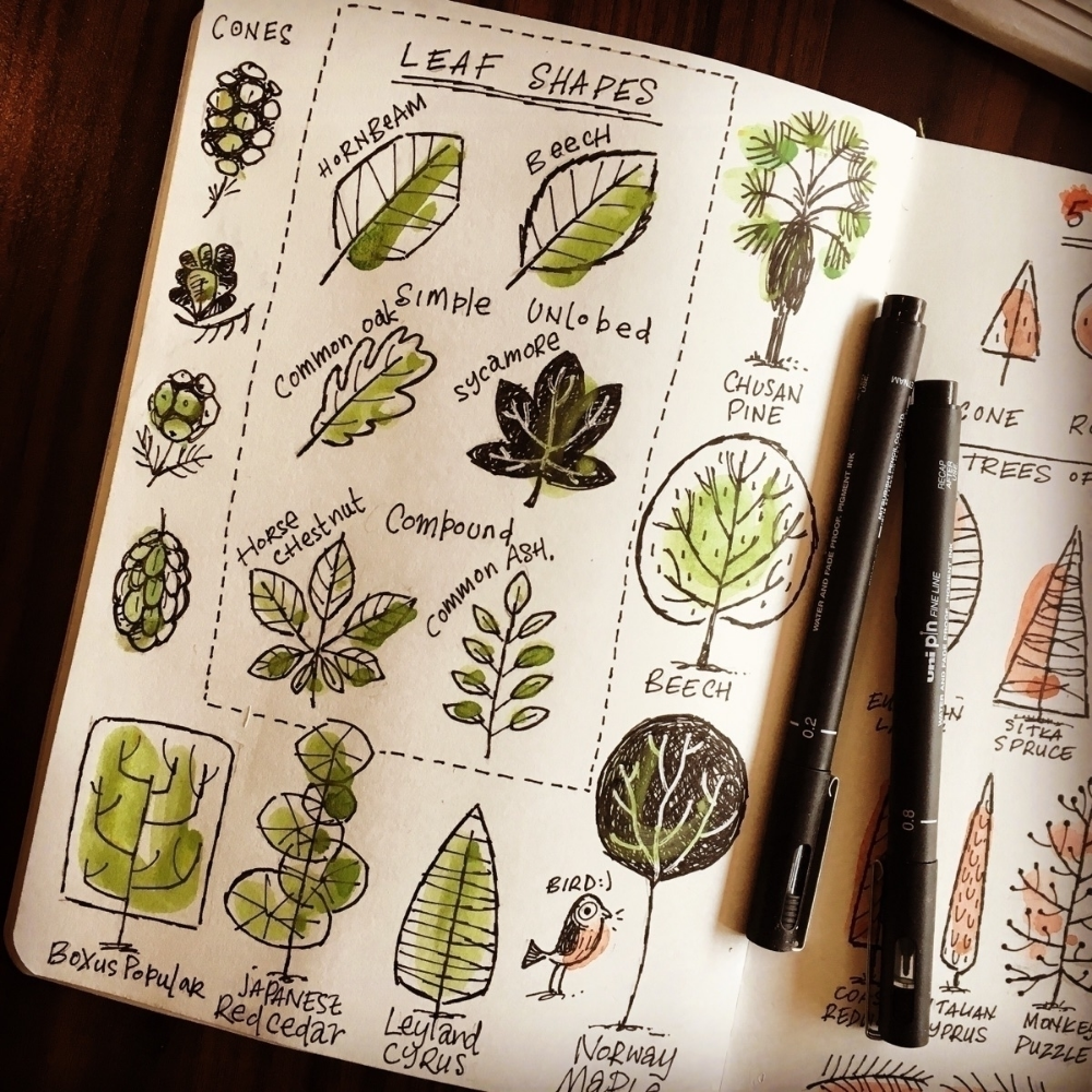 Trees pt2 - leaf shapes - sketchbook - stevesimpson | ello