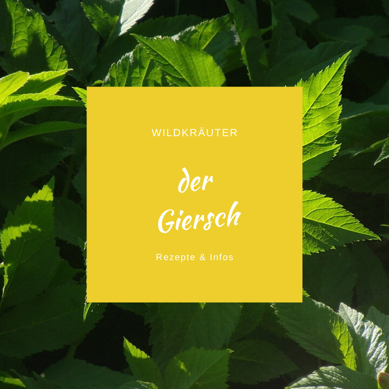 Pin Auf Outdoor Wildkrauter Krauter