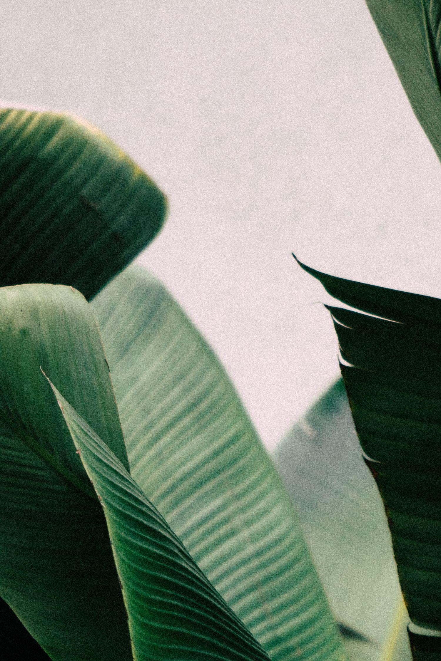 INSTANT DOWNLOAD PRINT, Minimal Palms Art Print, Palm Art Print, Nature Art Print, Palm Leaves Art Print