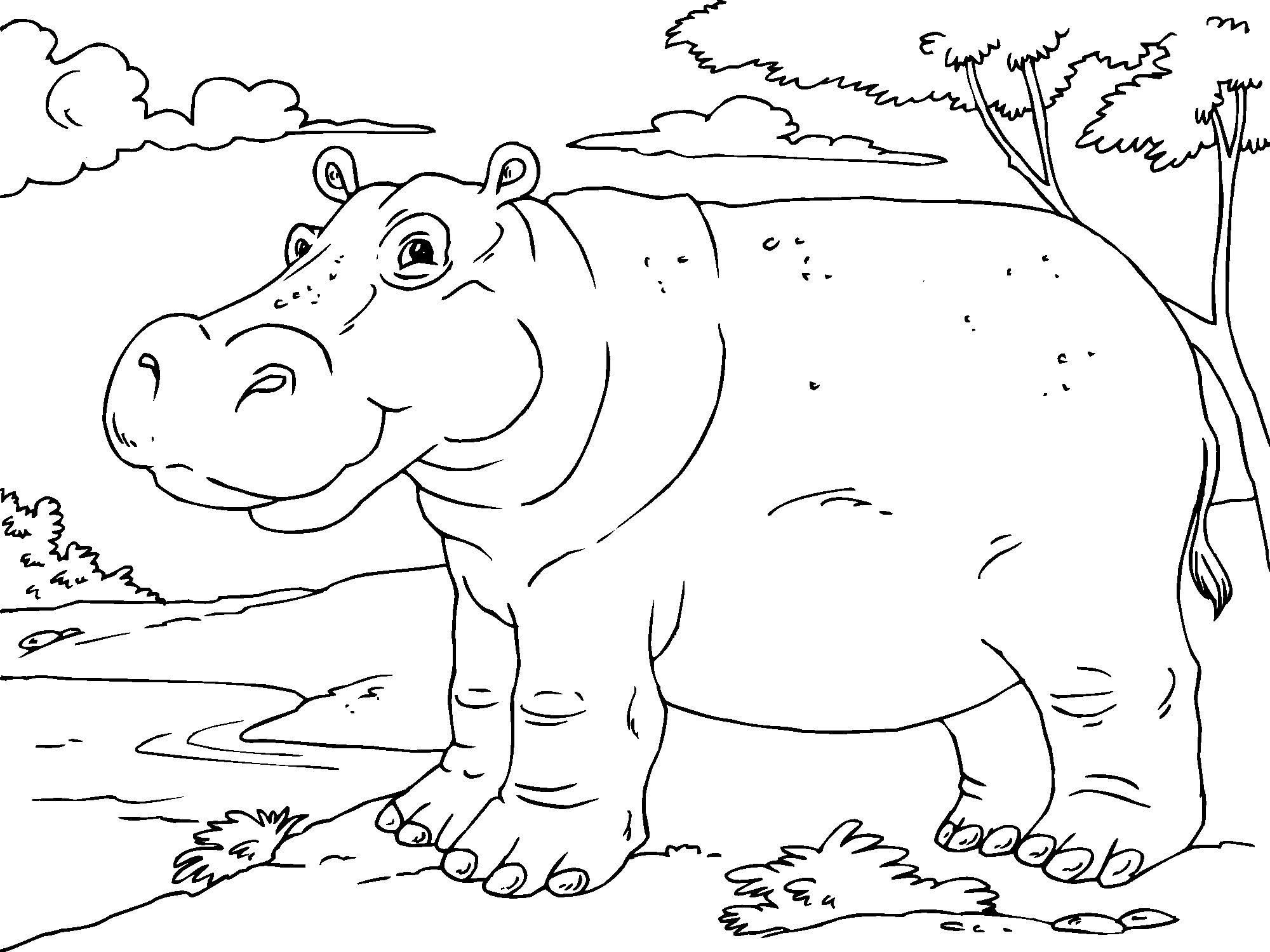 Colouring Pages Hippo Coloring In Painting Free