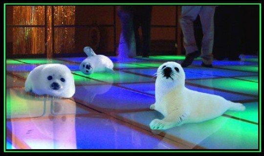 Baby seals out 'clubbing'
