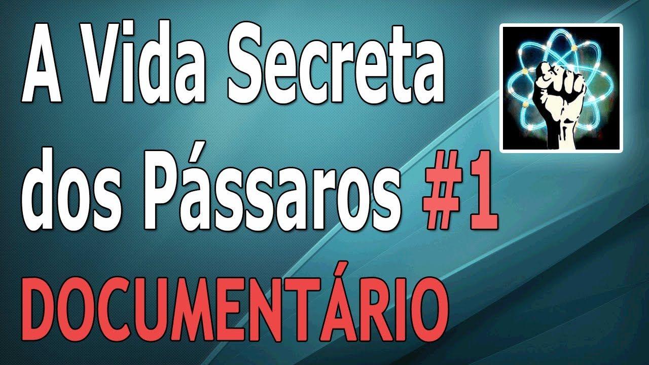 A Vida Secreta Dos Passaros Ep 1 5 Documentario 2012 Com