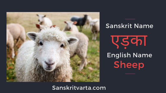 All Animals Name In Sanskrit Wild Domestic Pet And Water