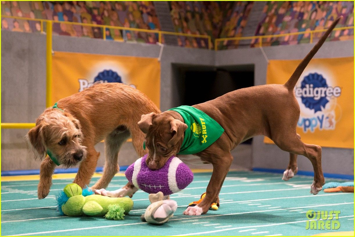 What Is The Puppy Bowl 19 Puppy Bowls Puppies Photo
