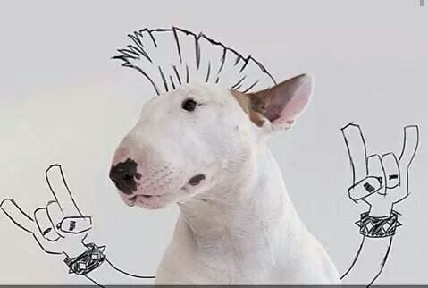 LoL #horns #high #canine #dog #heavy #metal | Metal | Bull