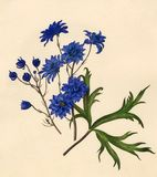 Dianthus caryophyllus : Gardenia jasminoides