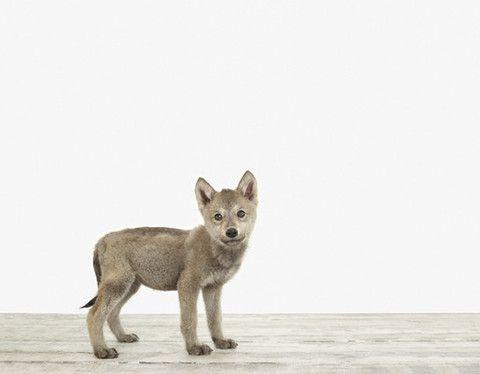 Wolf Pup No 2 Ausgestopftes Tier Tierbabys Susseste Haustiere