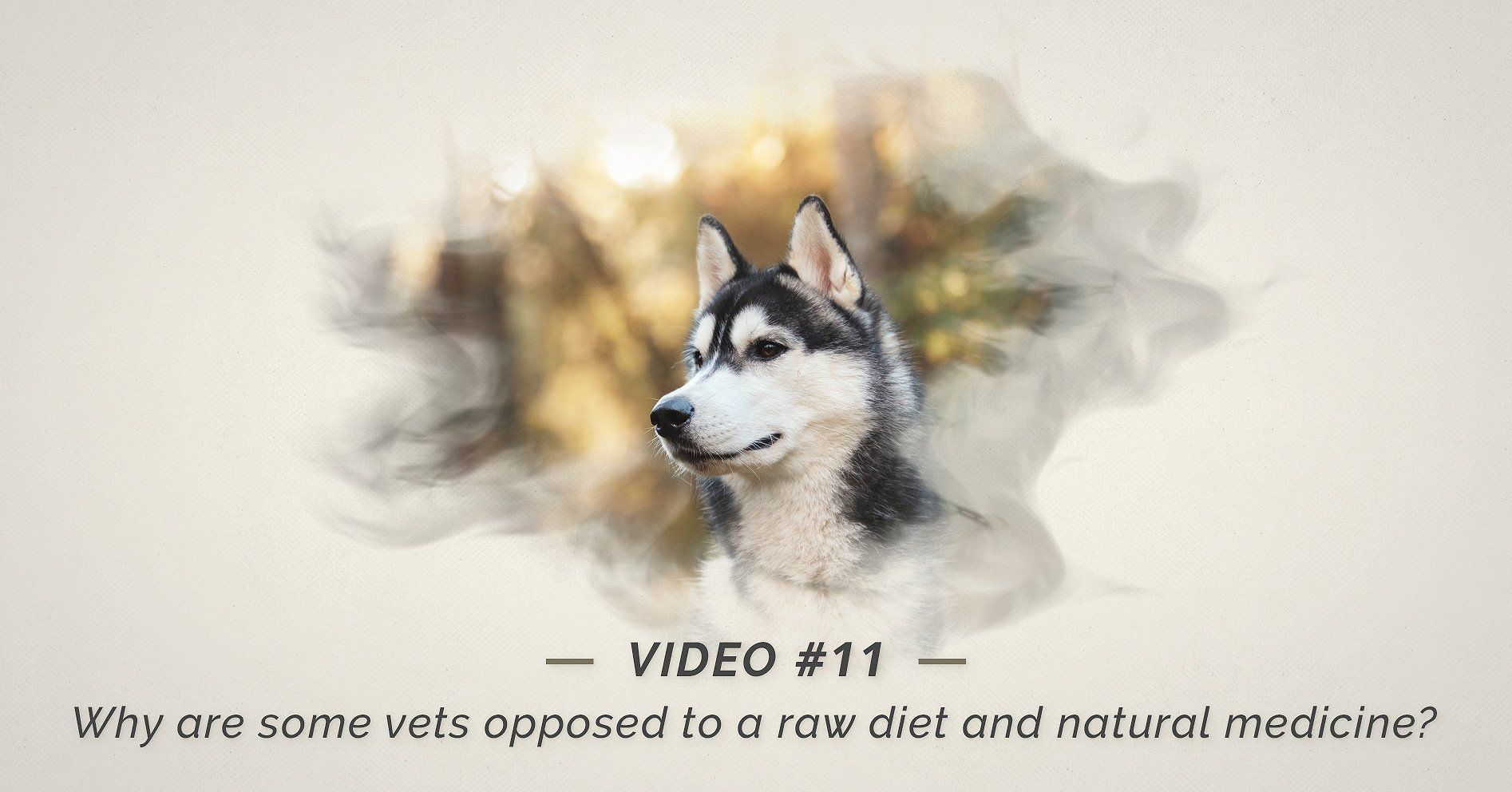Why Are Vets Opposed To A Raw Diet And Natural Medicine Natural