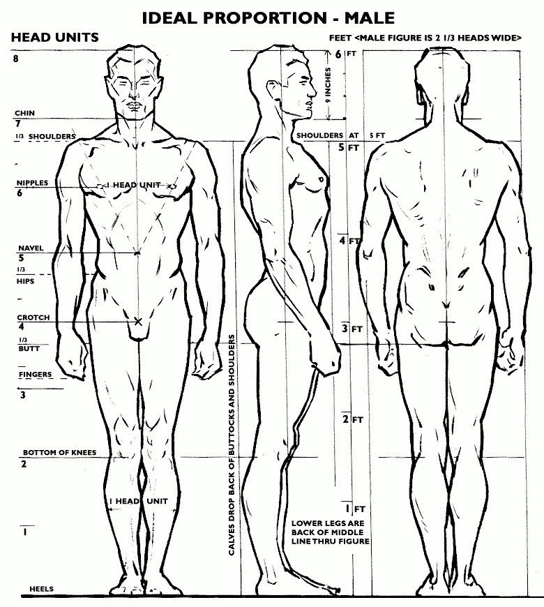 How to draw the Male body/physique proportions | Artistic references ...