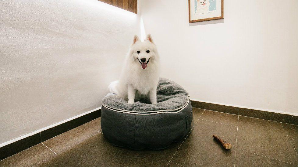 Pet Hostel Dog Sitter Near Me Dog Sitters Near Me Sick Pets Dog Bed Luxury