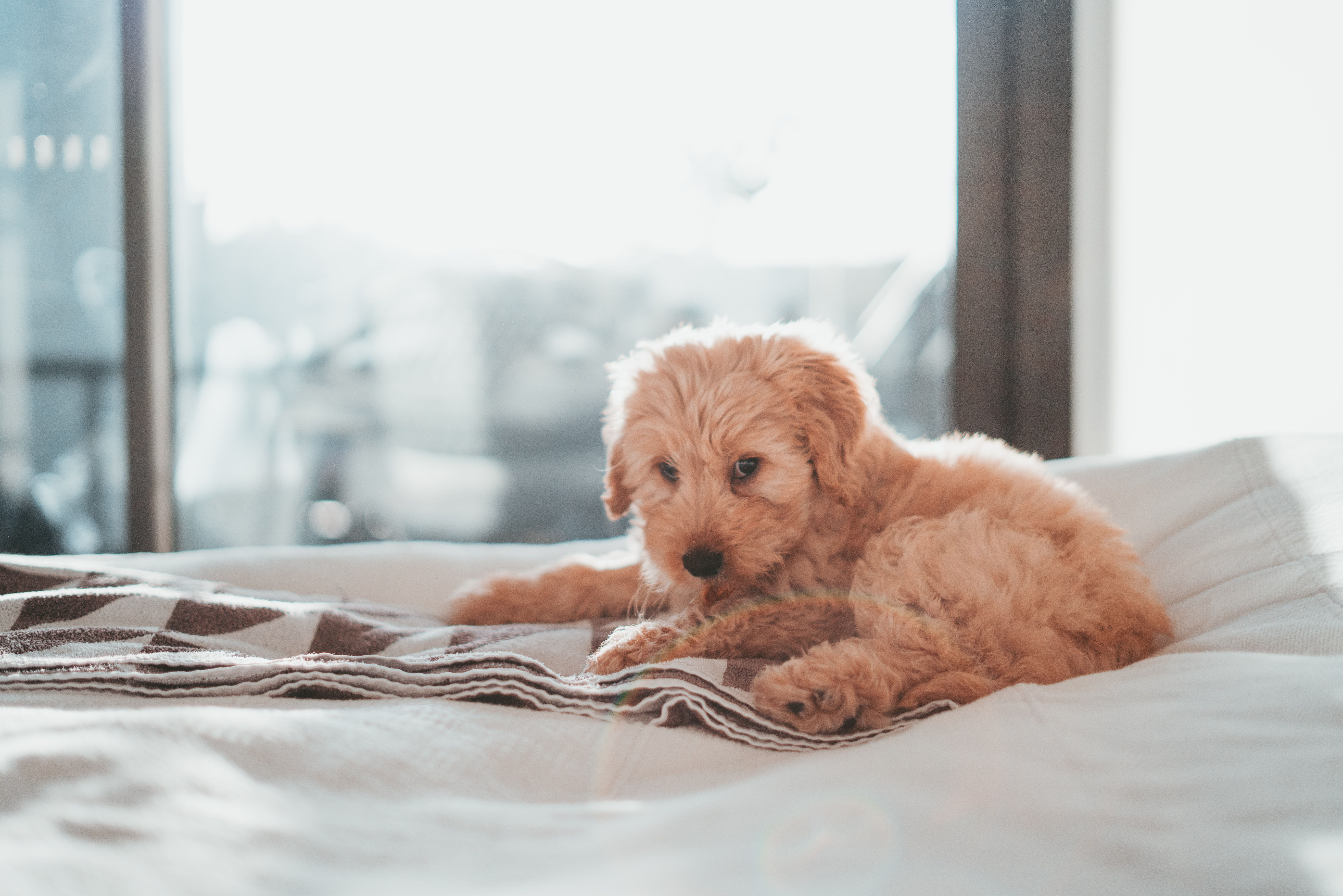 Pet Urine and Odor Removal Southside ChemDry in 2020