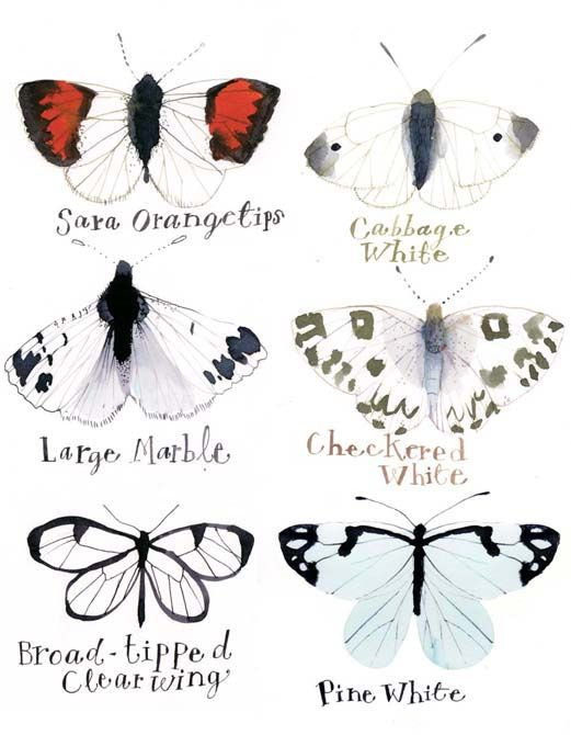 rebecca_pp_butterflieswhiteweb