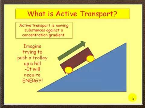 This Is A General Representation Of Active Transport Similar To How