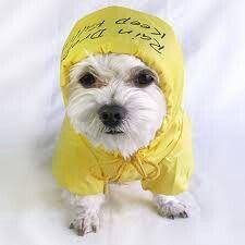 Perfect rain jacket for my dog!