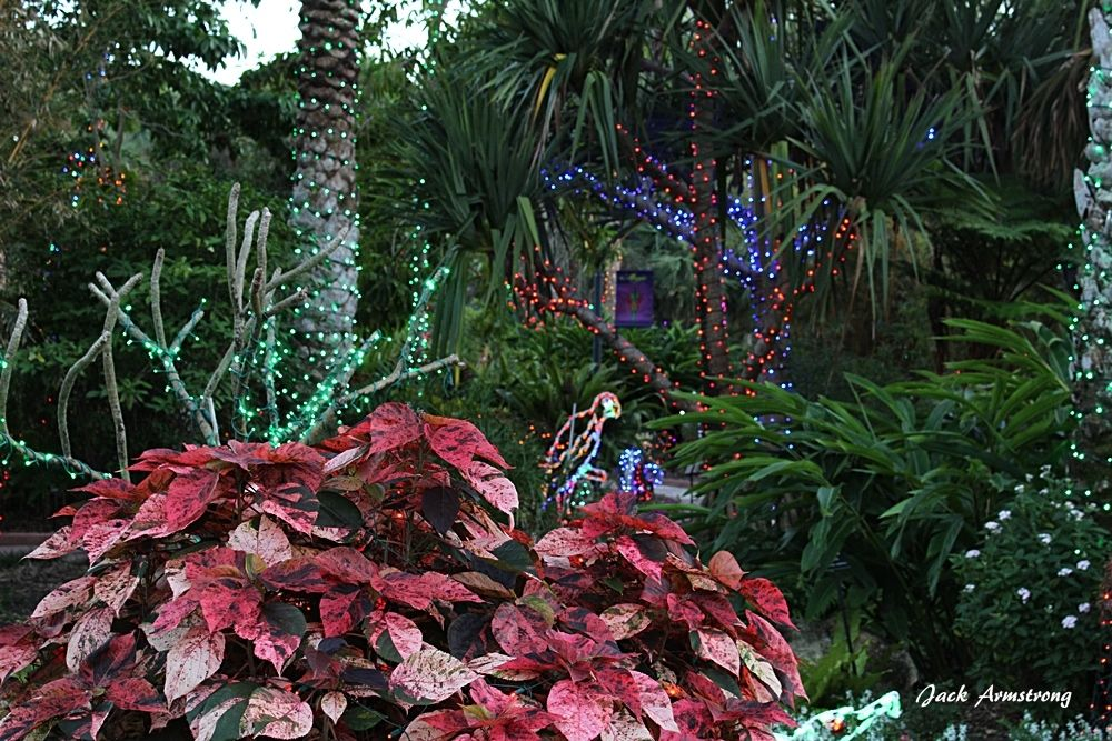 Beautiful flowering plants and Christmas lights in Florida Botanical ...