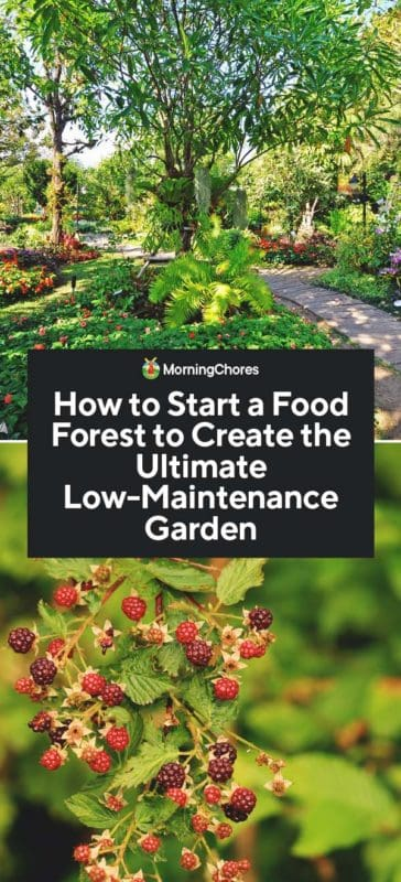 How to Start a Food Forest  The Ultimate LowMaintenance Garden is part of Food forest garden, Low maintenance garden, Forest garden, Food forest, Food garden, Garden planning - A food forest is all about borrowing the best elements of a forest to create a selfsustaining, healthy food garden to feed you for years to come