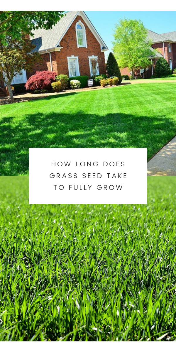 How Long Does Grass Seed Take To Fully Grow In 2020 Grass Seed Healthy Grass Lawn Care Tips