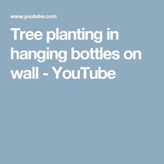 Tree planting in hanging bottles on wall - YouTube