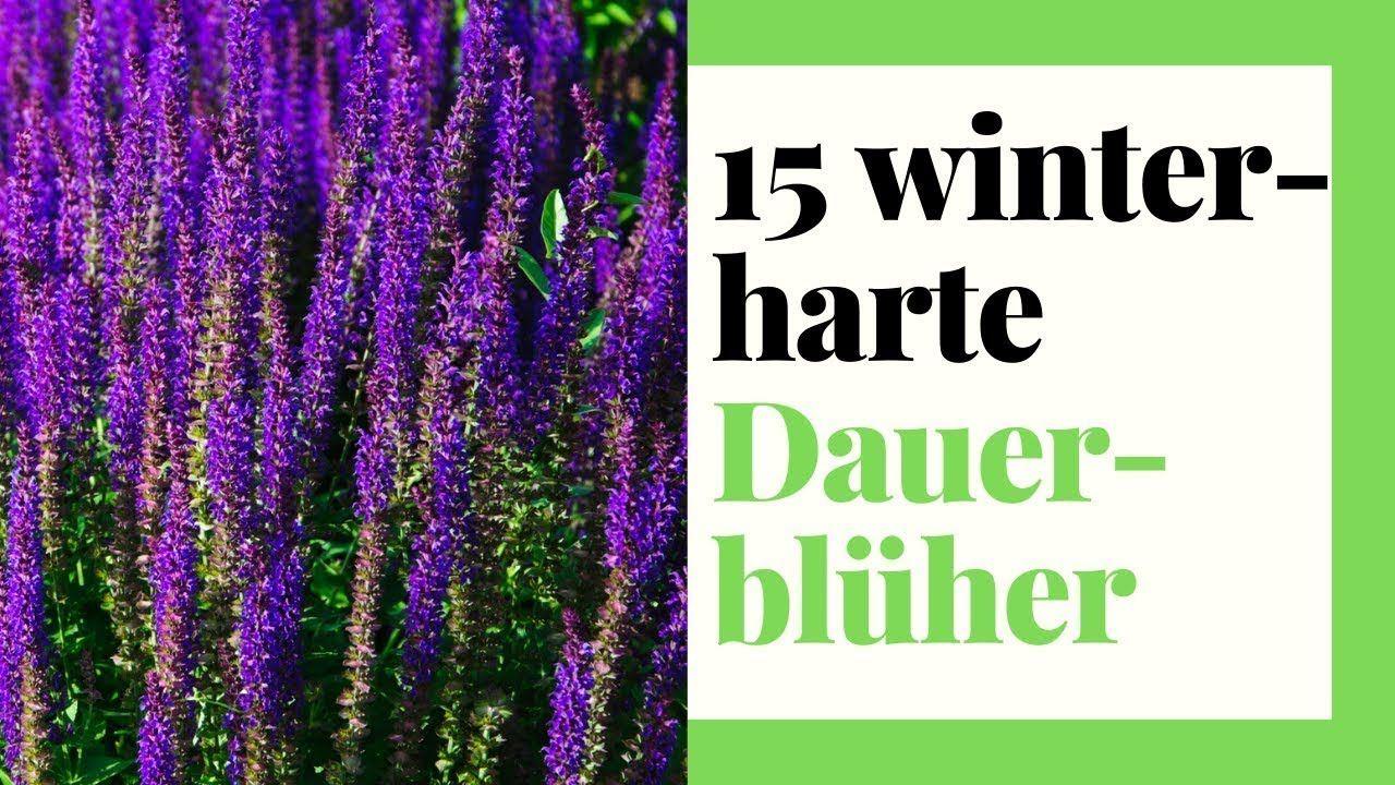 15 Winterharte Dauerbluher Stauden Fur Garten Kubel Und Balkon Youtube In 2020 Winterharte Stauden Winterharte Pflanzen Fur Balkon Stauden