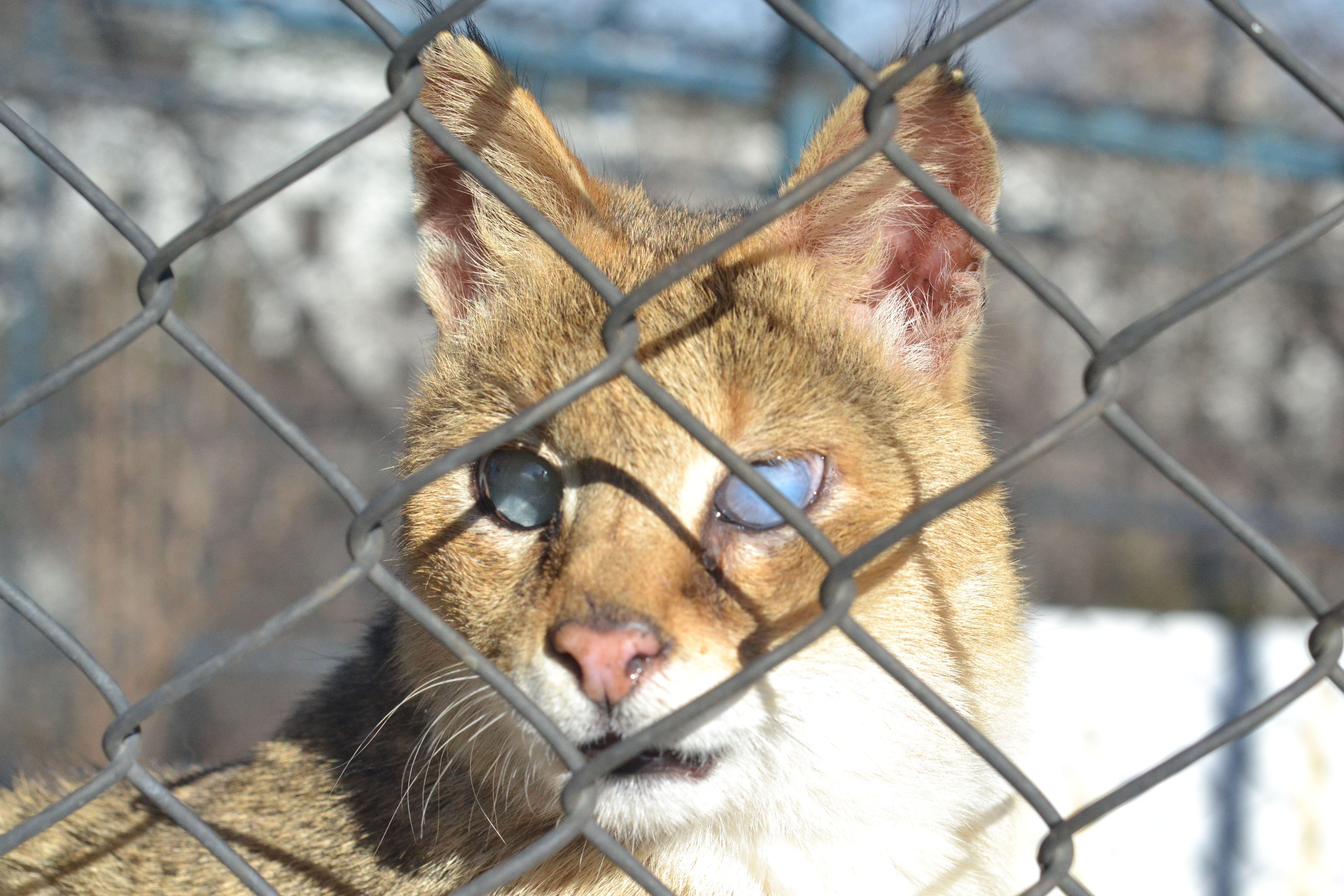 Beautiful Blind Cat in 2020 Cats, Beautiful blinds, Animals