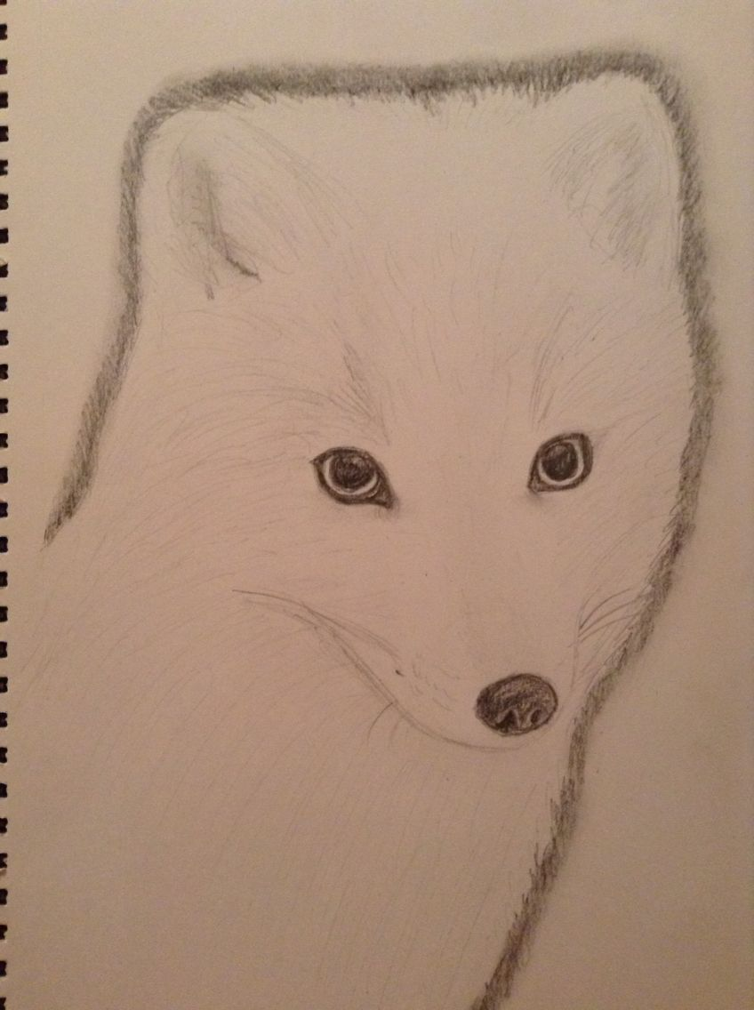 Arctic Fox for @eternallynotawa 09/10/2015 xx