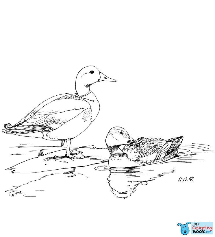 Ducks Coloring Pages Free Coloring Pages For Domestic Duck Coloring Pages