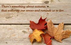 Superb Quotes About Autumn Colors   Google Zoeken