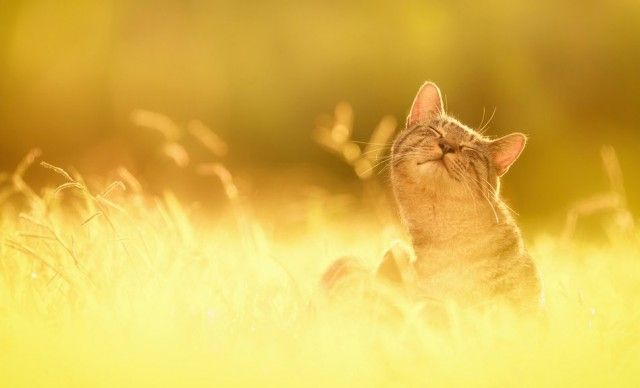Image result for cats and the sun