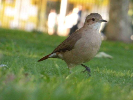 Pin En Aves Del Mundo