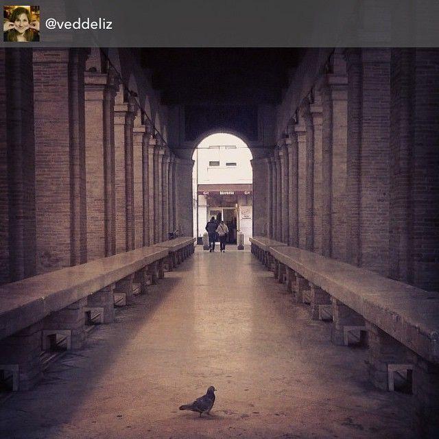 #cantinette #monday #silenzio #myrimini #rimini #lights #shadows #piccione #solitario #regram di @veddeliz