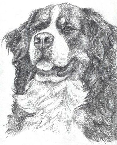 Pes Kresleny Tuzkou Hledat Googlem Pes Mountain Dogs Drawings