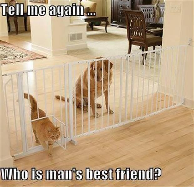 Funny Pictures Of The Day 47 Pics Pet Gate Funny