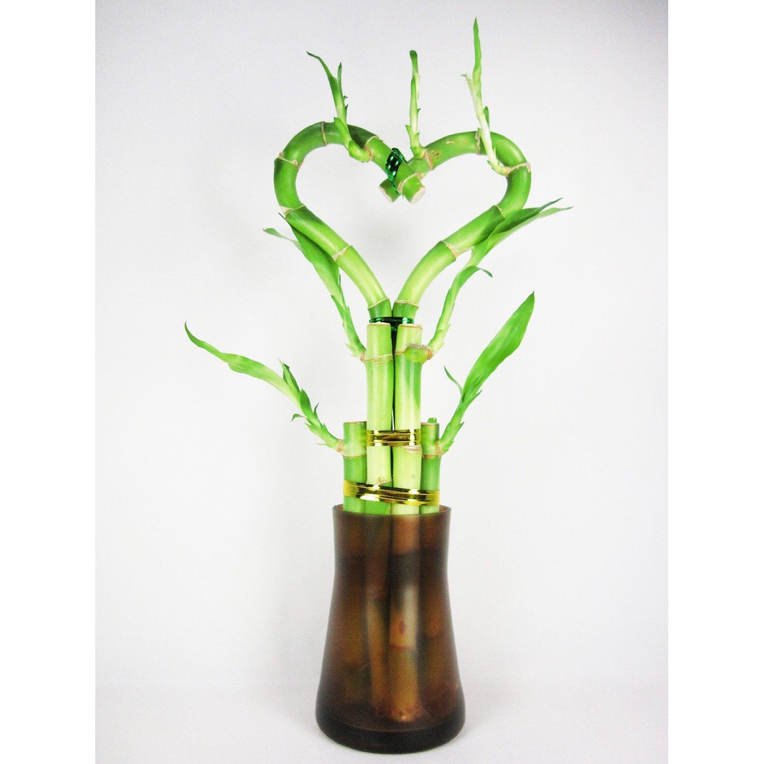 What do the colors of ribbon symbolize on lucky bamboo ehow - Live 6 Heart Style Lucky Bamboo Orange Tall Glasses Vase Free Shipping Nice Gift