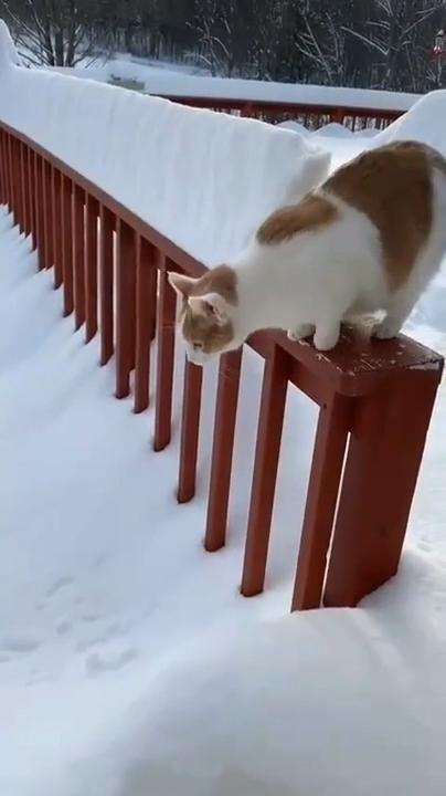 Curiosity froze the cat