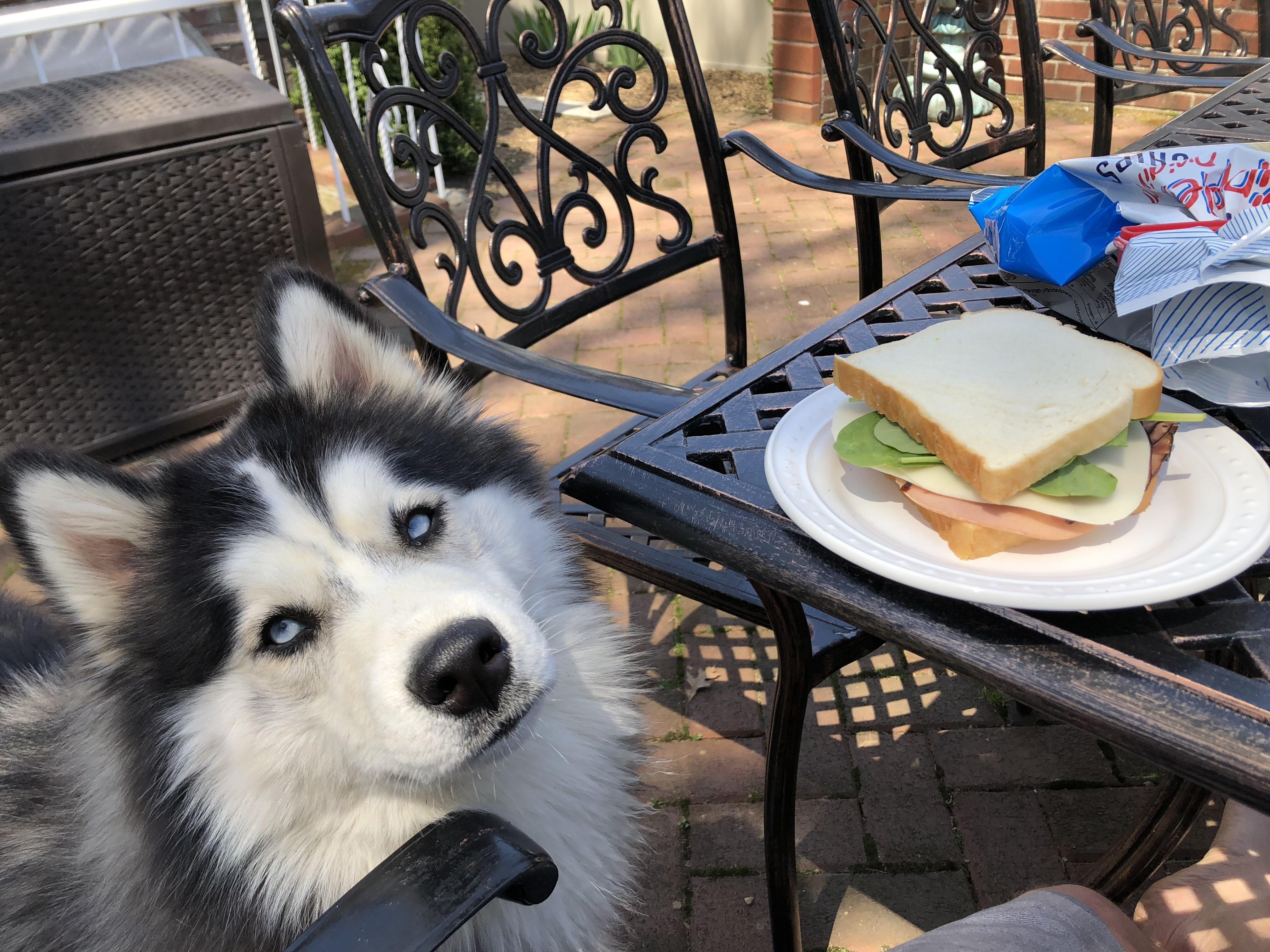My Lunch Datehttps I Redd It 6029zc1w1hv01 Jpg Siberian Husky
