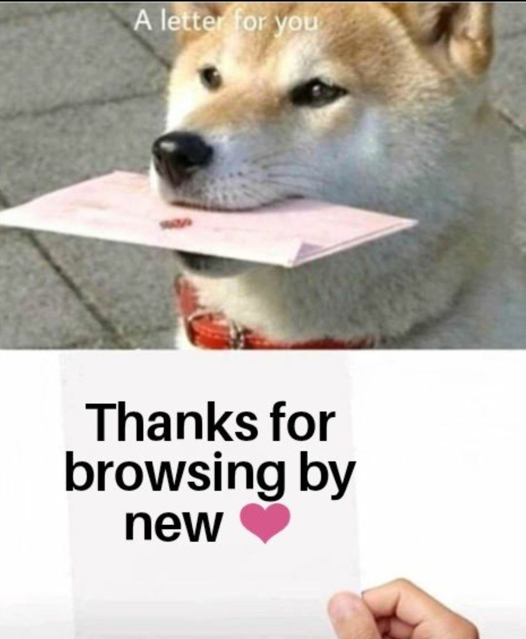 Thank You Reddit User Very Cool Https Ift Tt 2q9clfh Funny Pictures Memes Funny Memes