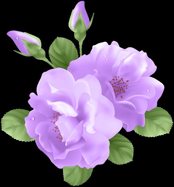 Purple Roses Transparent PNG Clip Art | Flores Imagenes ...