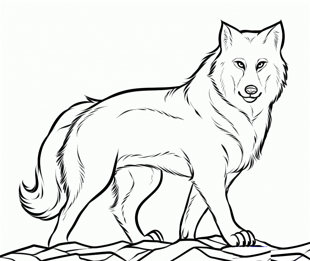 Polar animals coloring pages for kids - Arctic Animal Coloring Pages Picture Wolf Coloring Pages Gif 995