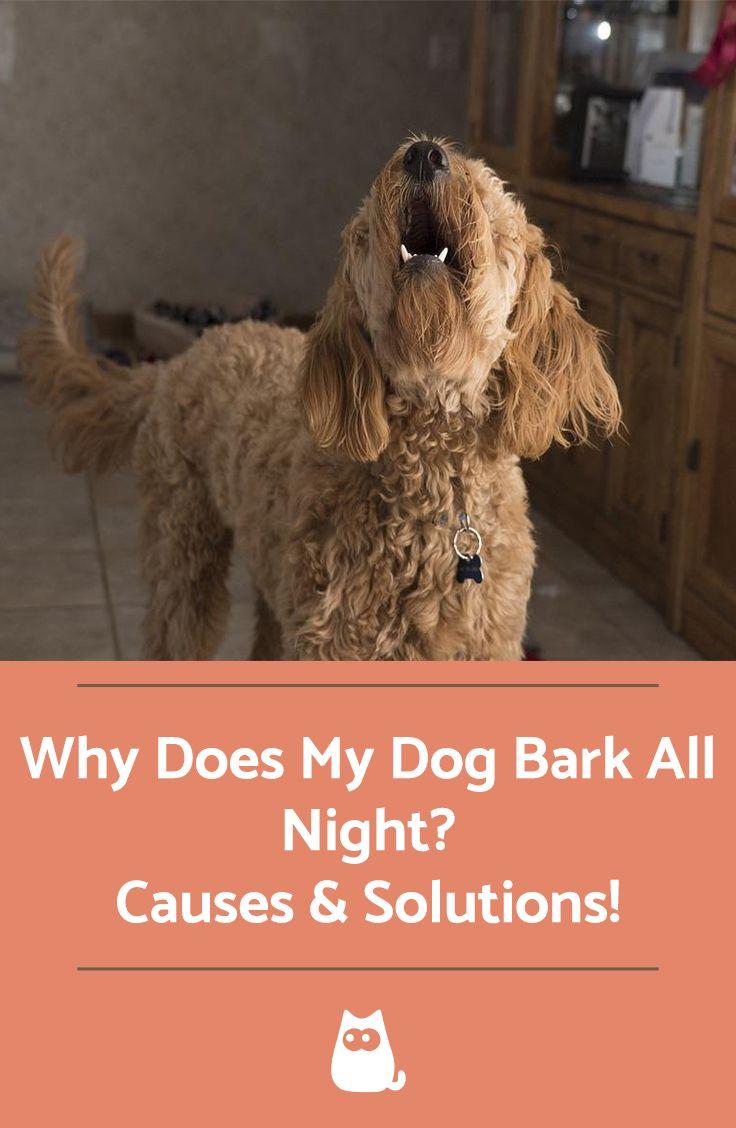 Why Does My Dog Bark All Night? Dogs, Dog barking, Dog
