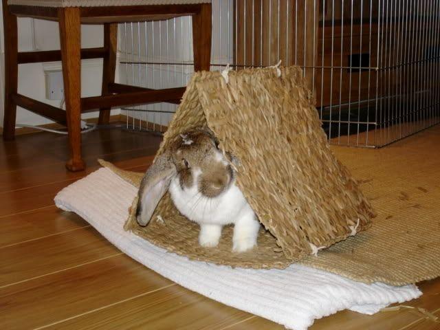 Grass Mat Pet Tent - PetDIYs.com