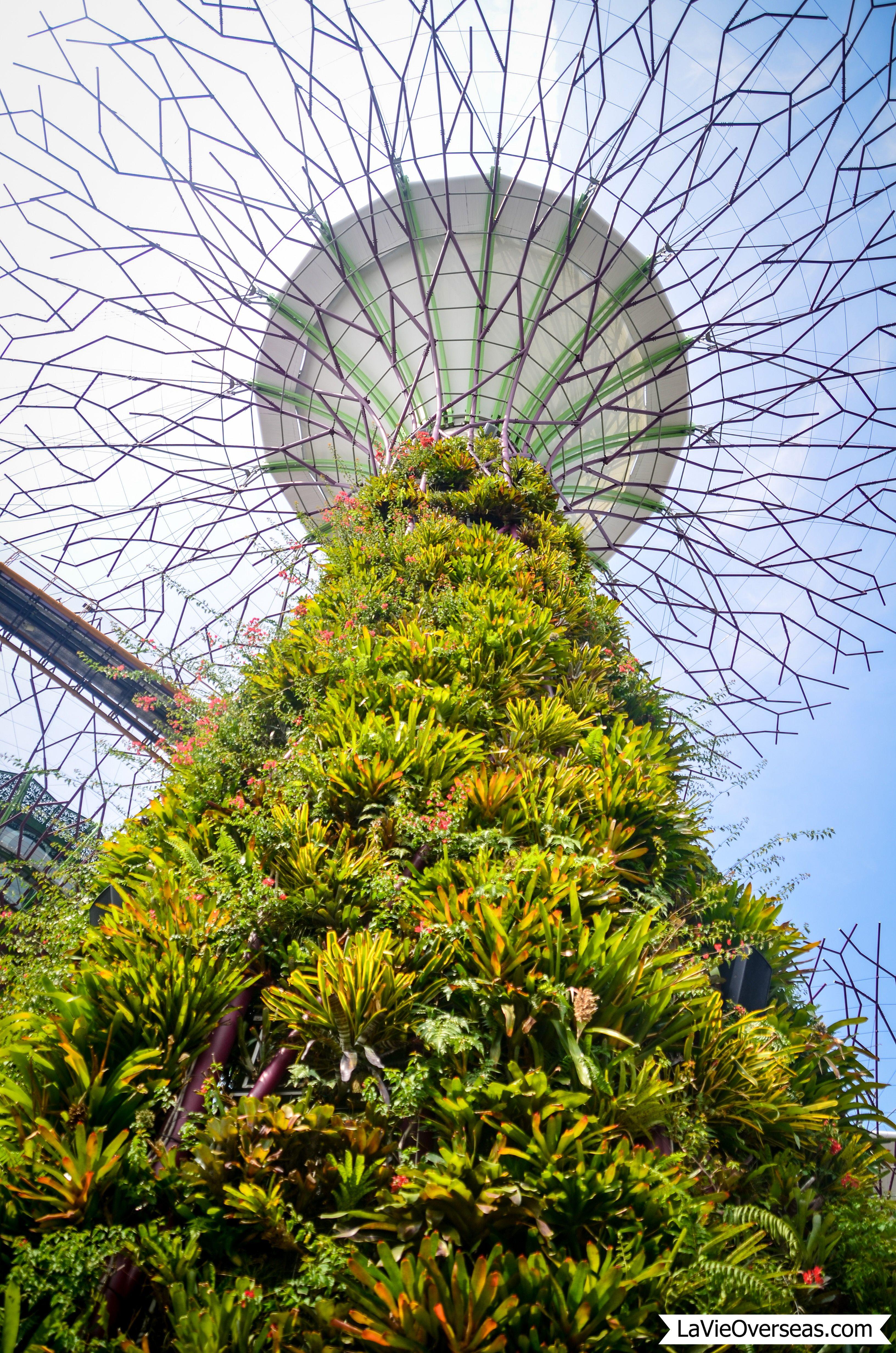 singapore, gardens by the bay Singapore garden, Gardens
