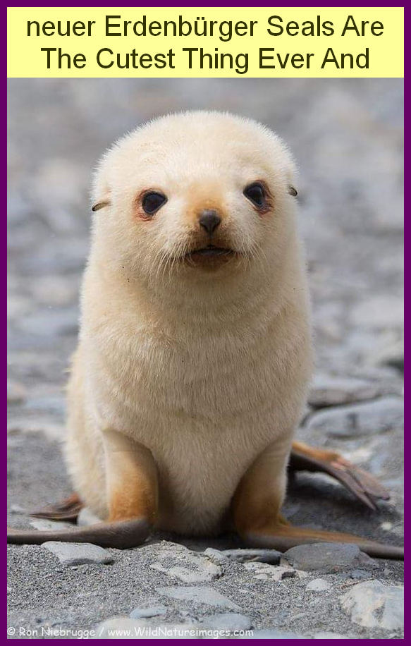 Best Neuer Erdenburger Seals Are The Cutest Thing Ever And Mutmassung Photos Are Her Baby Seal Cutest Thing Ever Funny Halloween Memes