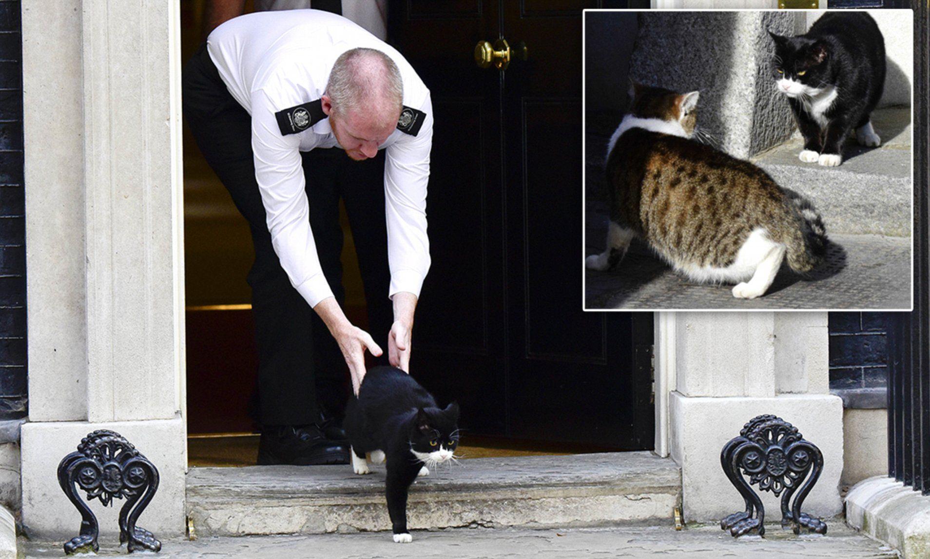 Boris Johnson S Cat Is Shown The Door At No 10 Cats Super Furry Animals Indoor Cat