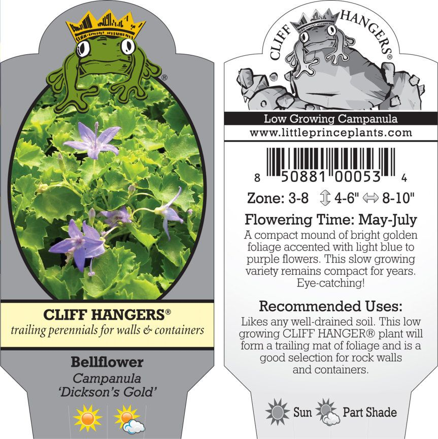 Campanula Dickson S Gold Bellflower 3 5 Pot Little Prince To Go In 2020 Campanula Bellflower Plant Problems