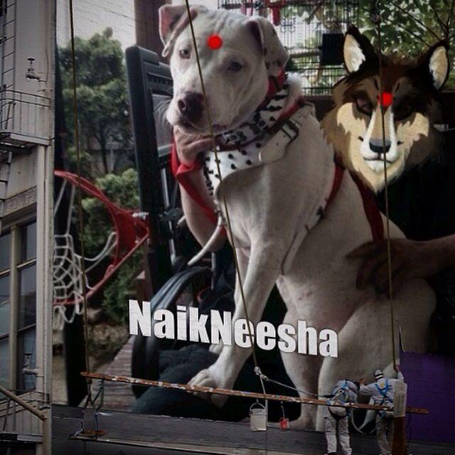 Naikneesha 7 Months Two Weeks Name India Female Neesha Naik H