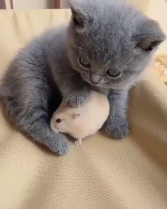 Katzchen Mit Hamster Freund Katzen In 2020 Susse Tiere Baby Katzen Niedliche Tierbabys