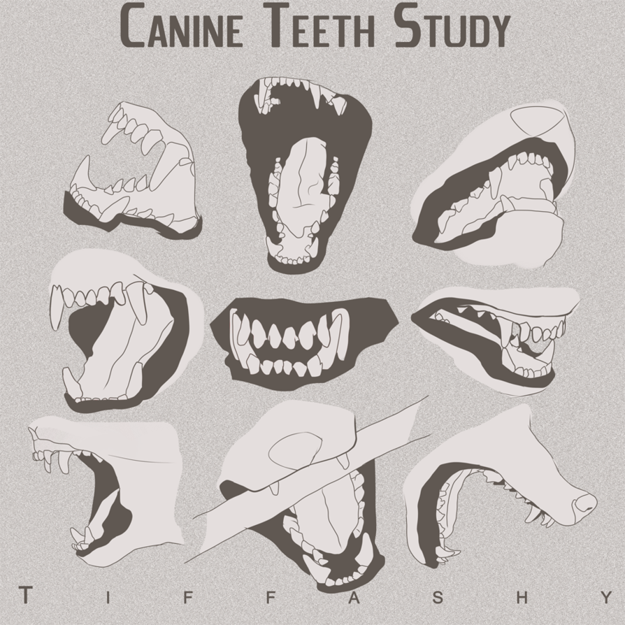 Anatomy notes 6 incisors (front teeth)4 canines/fangs, bottom ...