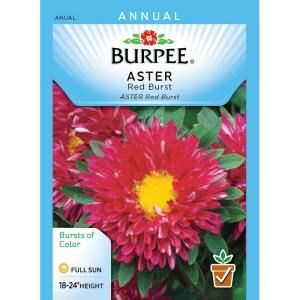 Burpee Aster Red Burst Seed 39383 The Home Depot Flower Seeds Plant Covers Growing Flowers